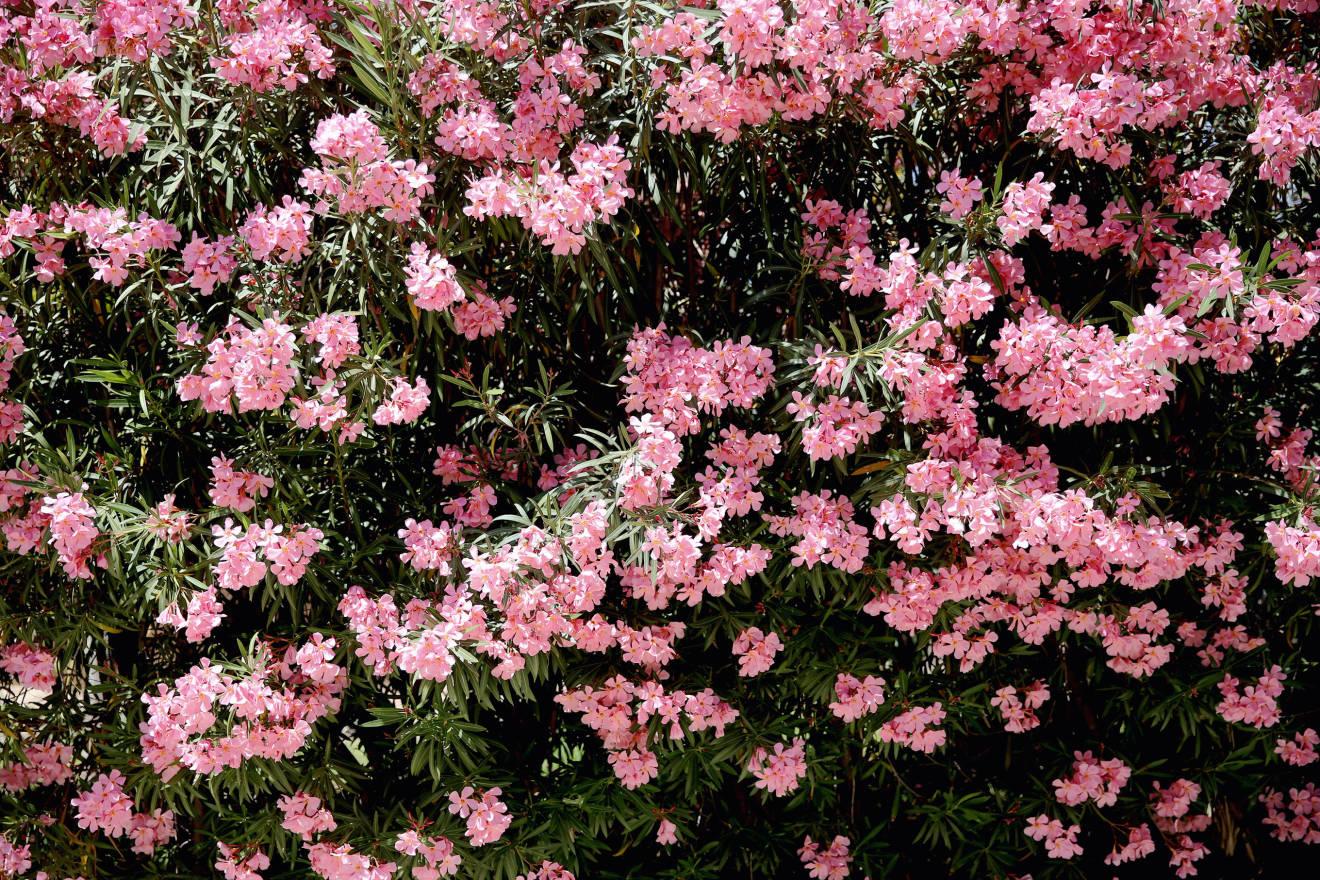 wethpeople_jessiebush_flowers_1